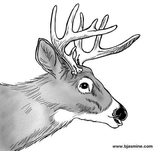Deer Line Drawing by Brandi Jasmine, All Rights Reserved