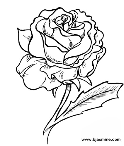 Rose Line Drawing by Brandi Jasmine, All Rights Reserved
