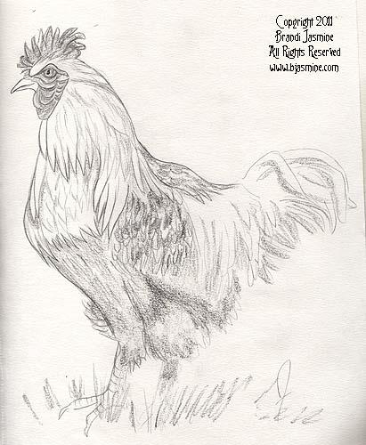 Chicken Pencil Sketch by Brandi Jasmine, All Rights Reserved