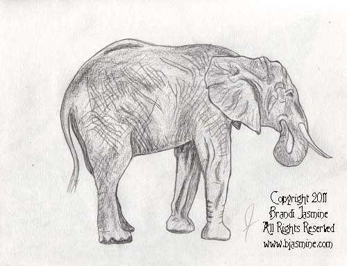 Elephant Pencil Sketch by Brandi Jasmine, All Rights Reserved