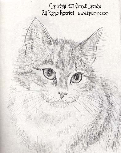 Cat Pencil Sketch by Brandi Jasmine, All Rights Reserved