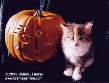 Punkin (Kitten) and Pumpkin Picture