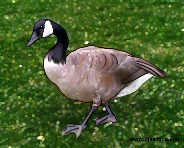 Canada Goose Digital Illistration by Brandi Jasmine, All Rights Reserved