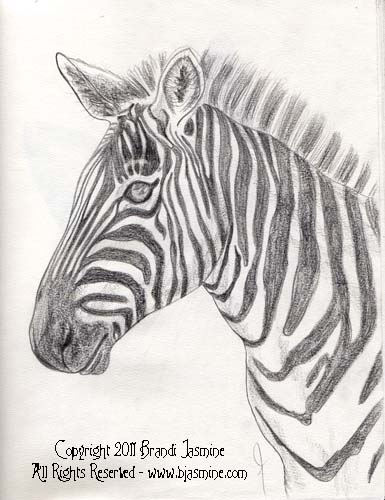 Zebra Pencil Sketch by Brandi Jasmine, All Rights Reserved