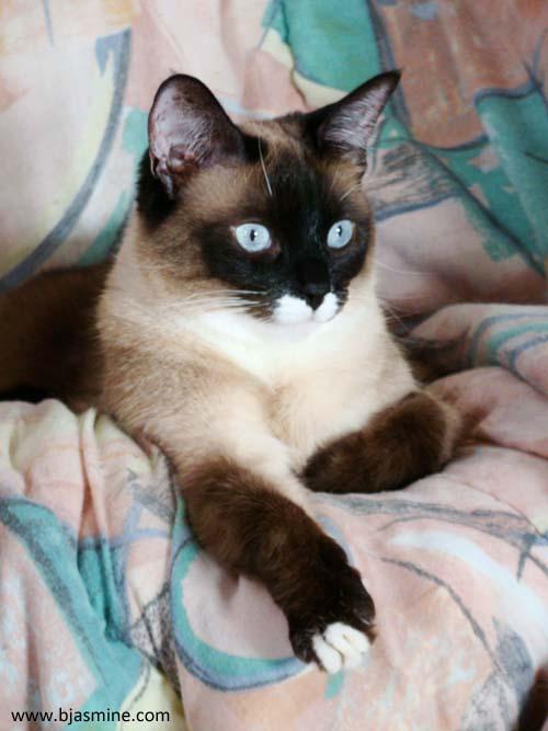 Pet Portrait Sawyer Photography