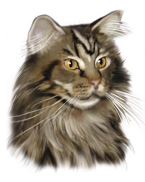 Cat Portrait Digital Airbrush